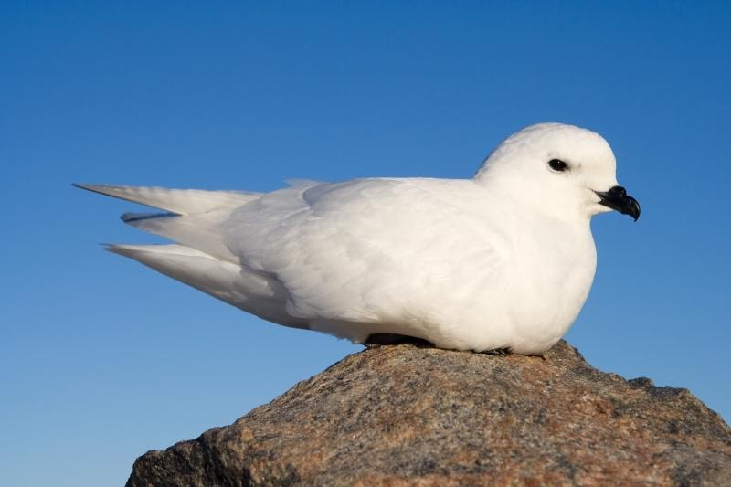статье птицы антарктиды с названиями свищ после хирургических