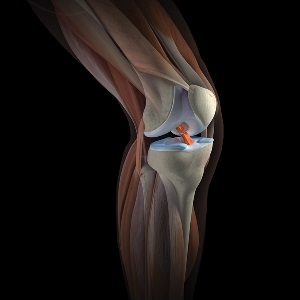 Полуподвижное соединение костей находится в коленном суставе заболевание суставов колена гонартроз лечение